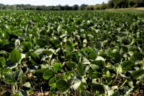 Ohio: Agronomy Workshops, Wooster, Feb. 15, 16