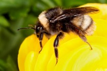 Ohio Soybeans: Be Protective of Bees When Spraying Pesticides
