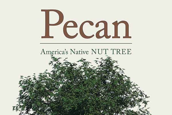 """Pecan: America's Native Nut Tree"" Written by UGA Pecan Specialist"