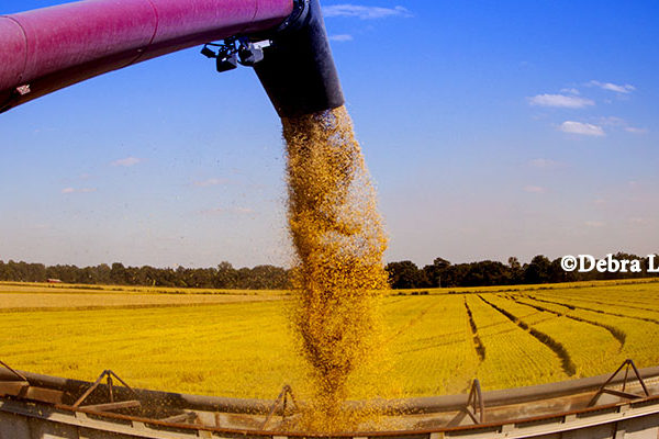 Global Markets: Rice – China Strengthens Its Importance in Global Trade