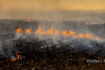 Arkansas: Burning Crop Residue in Rice, Wheat, Soybeans and Corn Fields