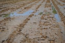 Alabama Weeds: Wrapped Up Burndown but Too Wet to Plant – What Now?