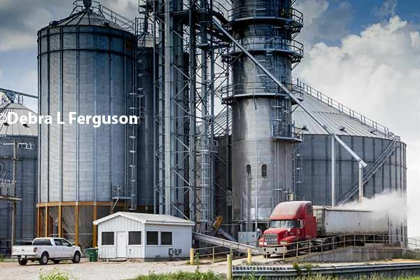 DTN Grain Open: Green Light for Commodities