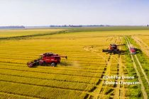 Rice Harvest Stalls Across Much Of Belt – AgFax