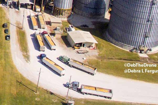 DTN Grain Midday: Trade Moves Lower Across the Board