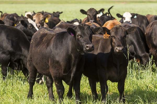 DTN Livestock Midday: Futures Shift Lower Midweek