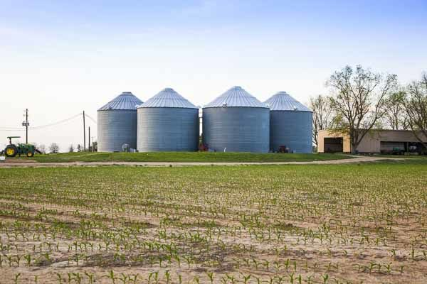 DTN Grain Open: Markets Quiet Ahead of USDA Reports