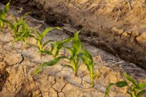 Tennessee: Corn Planting Winding Down