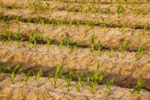Midwest Corn, Soybeans: Projected Prices for 2018 – More of the Same?