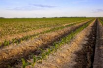 Grain TV: Corn Rallies On Weather Worries