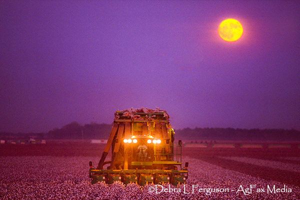 DTN Cotton Close: Tight-Range Day Ends Modestly Down