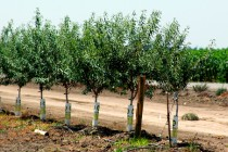 California: Solutions to Drought Stress Workshop, Modesto, Jan. 12-13