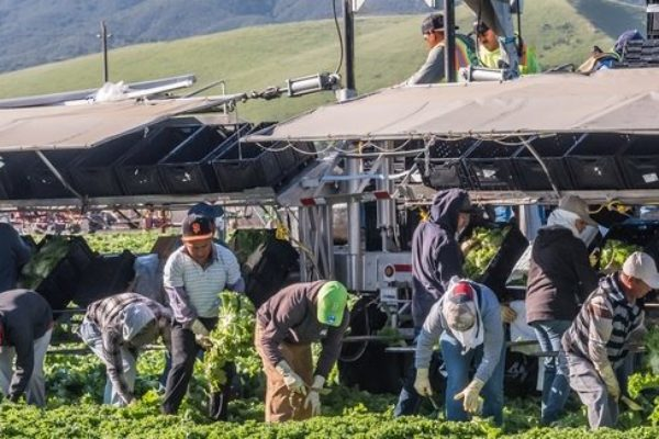Agriculture's Guest-Worker Program NOT Included in Trump's 'Hire American' Order – DTN