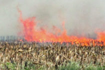 Arkansas: Rice Residue Burning – Pros and Cons