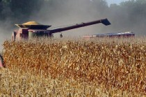 Southern Grains: Pest Pressure Builds Widely, Corn Harvest Starts – AgFax