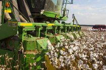 Arkansas: Cotton Harvest Breaks Records Despite Rocky Start