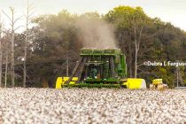 Cleveland On Cotton: Usage Increasing, Demand Will Hold Market And Boost Acres