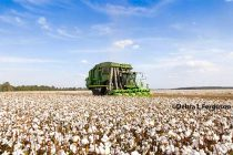Cleveland on Cotton: Consumption and Yields Just Keeps Growing