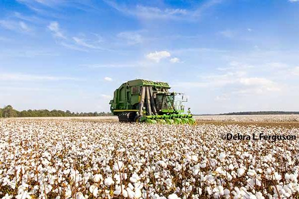 DTN Cotton Open: Holds Onto Slight Gains After Export Data