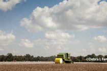 Tennessee Field Reports: Excellent Weather for Harvest and Planting