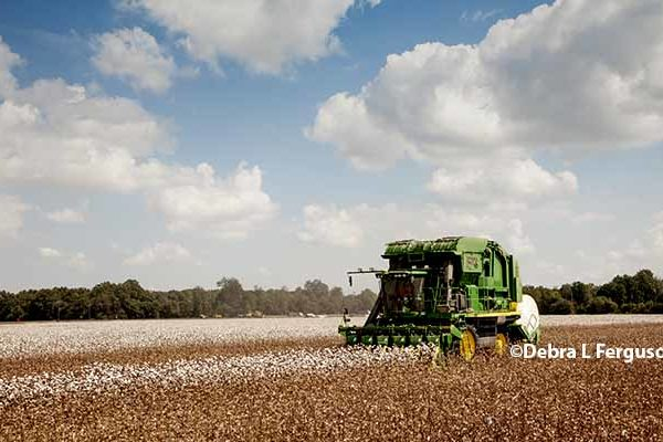 Thompson On Cotton: With Rally, Consider Pricing 2018 Crop