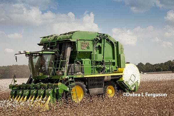 DTN Cotton Open: Hits New Current-Crop Contract Highs