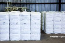 Cleveland on Cotton: WASDE Left Market Spinning from Highest Ever World Supply to Use Ratio