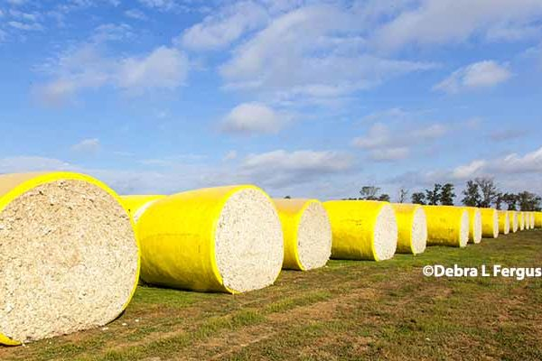 DTN Cotton Close: Settles on Limit Gains in March, May