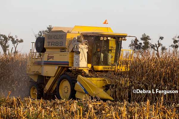Tennessee Field Reports: Growers Active with Field Work as Weather Allows
