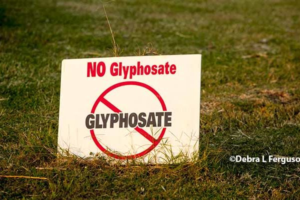 Congress Investigates Why Cancer Researcher Withheld Info Clearing Glyphosate – DTN