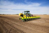 Florida Peanuts and Cotton: Don't Delay Planting – Higher Temps, Less Rain Expected