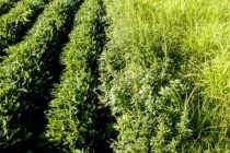 AgFax Weed Solutions – Weeds And Water | How Aussies Eliminate Weed Seeds