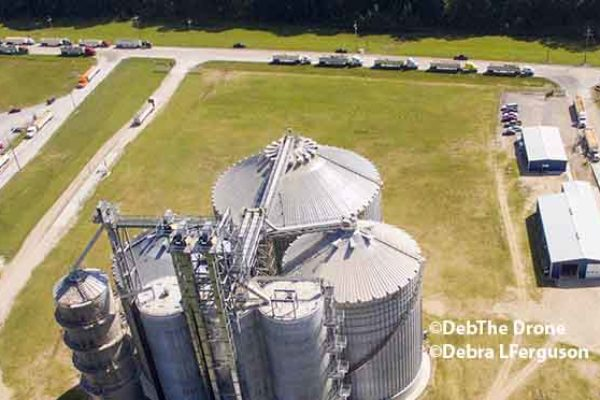 DTN Grain Midday: Light Downside Momentum