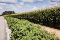 Herbicide Resistance Nothing New – How We Got Here. – VIDEO