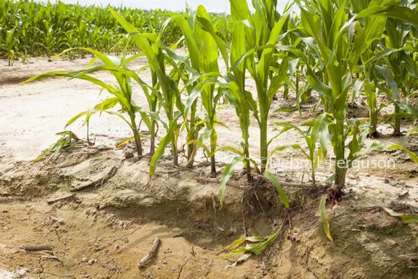 Farm Safety Net: Outlook for 2017 ARC-CO Payments