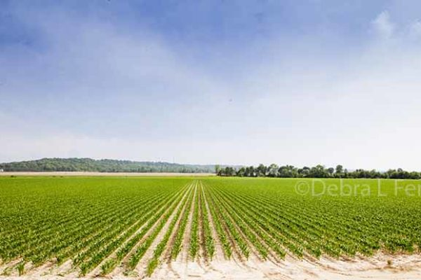 Farmland Values Up; Income and Cash Rents Declined – St. Louis Fed, 1Q 2017 Report