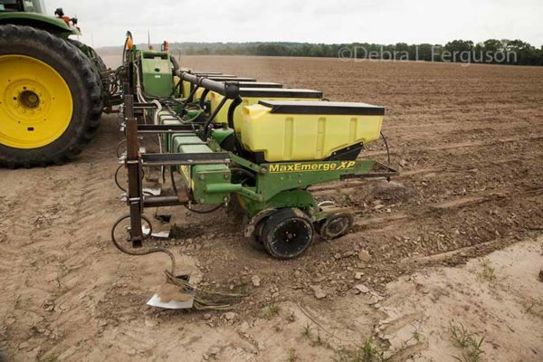 Arkansas Cotton: Some Still Planting While Others Debate Replanting