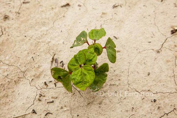 DTN Cotton Close: July Contract Beaten Like a Rug