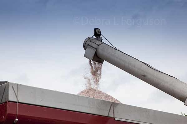 DTN Fertilizer Trends : Prices Up, Farmers May Have to Re-Work Budgets
