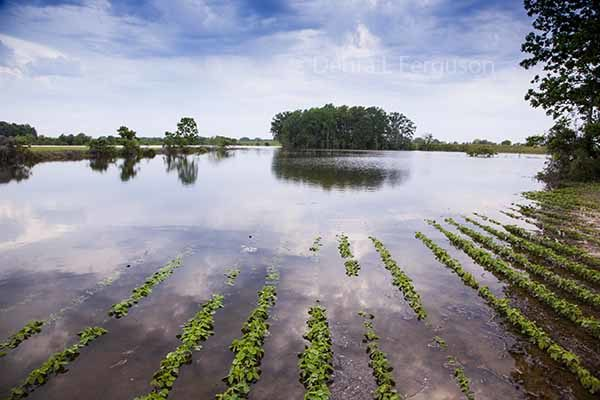 Missouri: 24 Counties Declared Natural Disaster Areas from Floods