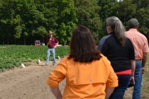 Louisiana Sweet Potatoes: Farmers Hear About AgCenter Research at Field Day