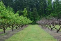 Texas Field Reports: Too Few Chill Hours Could Affect Fruit Crop