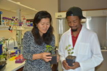 Texas Cotton: Researchers Identify Cause of Bacterial Blight