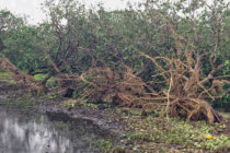 Florida: Hurricane Irma Ag Damages Estimated at $2.5 Bln