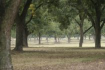 Mississippi: Pecan Field Day, Greenville, Oct. 6