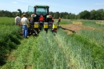 Tennessee: Weed Control with Your Cover Crop