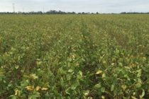 Louisiana: Tri-State Soybean Forum Highlights Producer Outlook