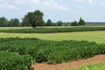 Fungicide Research: Small vs. Large Plots for Field Trials