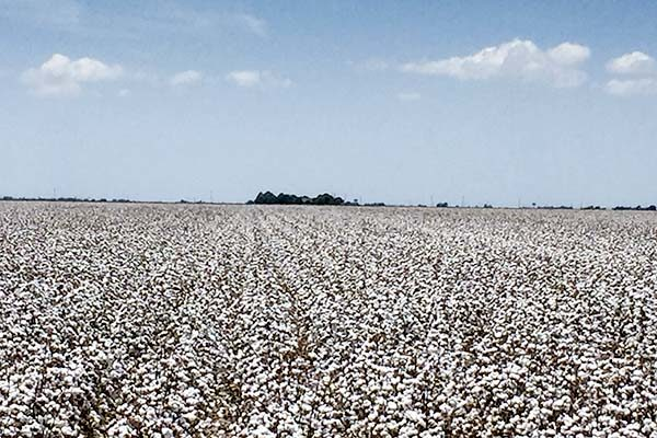 DTN Cotton Open: Ticks Modestly Higher in Early Trade