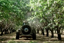 California Almonds: Airblast vs. Electrostatic Rigs – Is there a Difference?